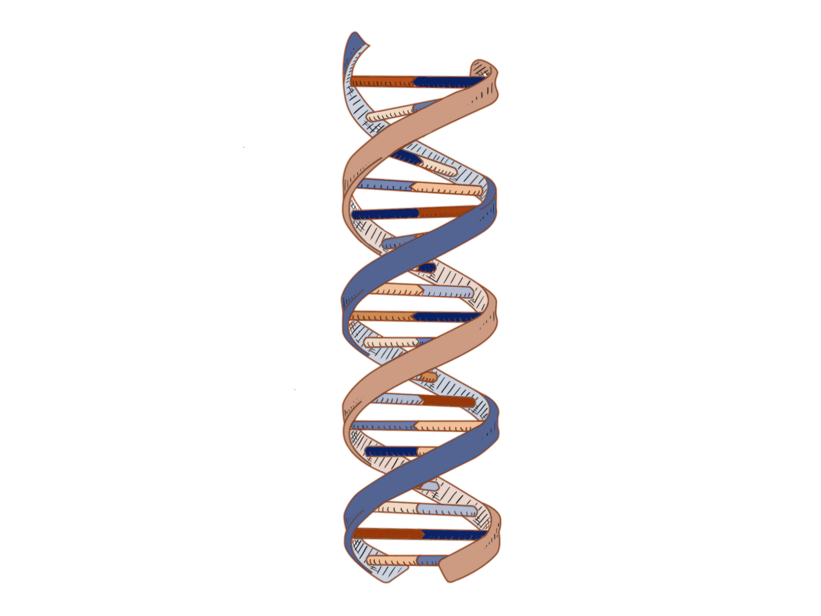 DNA_Color_Orange_Dark(1666X1250)